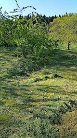 20170514山の様子草刈りの済んだ場所