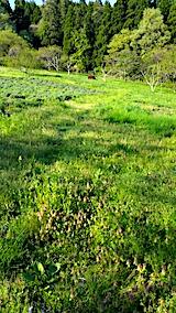 20170514ラベンダー畑の周り草刈り前の様子2
