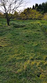 20170514ラベンダー畑の周り草刈り後の様子1