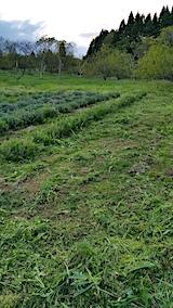 20170514ラベンダー畑の周り草刈り後の様子5
