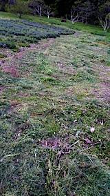 20170514ラベンダー畑の周り草刈り後の様子2