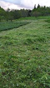 20170515ラベンダー畑の草刈り後の様子5