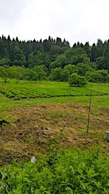 20170604ラベンダーの畑3