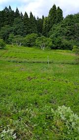 20170605ラベンダーの畑1