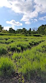20170605ラベンダーの畑3