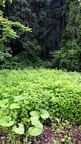 20170605野菜畑周囲の草刈り前1