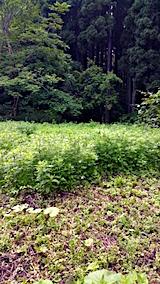 20170605野菜畑周囲の草刈り前2