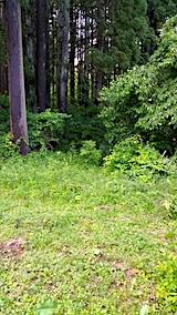 20170605野菜畑周囲の草刈り前4