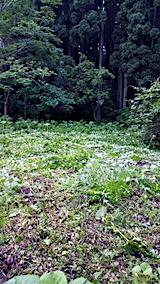 20170605野菜畑周囲の草刈り後2