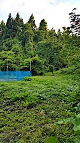 20170605野菜畑周囲の草刈り後3