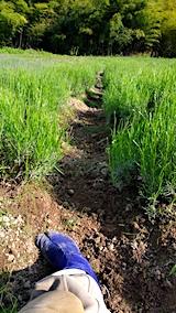 20170609ラベンダー畑の草取り途中の様子1