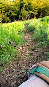 20170609ラベンダー畑の草取り途中の様子3