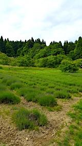 20170615ラベンダーの畑