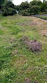 20170625ラベンダー畑周囲の草刈り後の様子1
