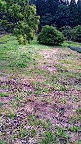 20170625ラベンダー畑周囲の草刈り後の様子2