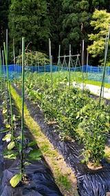 20170629野菜の畑