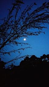 20170629七夕用の笹とお月さま