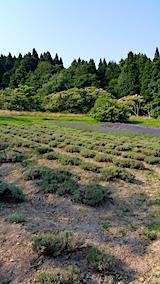 20170707外の様子昼過ぎラベンダーの畑