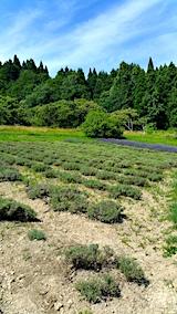 20170711ラベンダーの畑