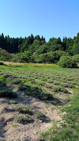 20170714ラベンダーの畑