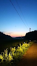 20170714外の様子夜のはじめ頃田んぼ