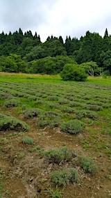 20170717ラベンダーの畑