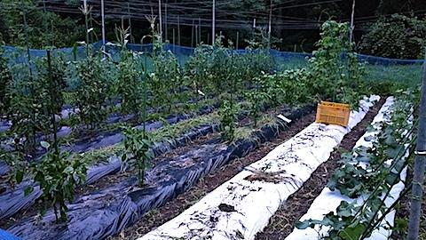 20170717野菜畑草取り後4