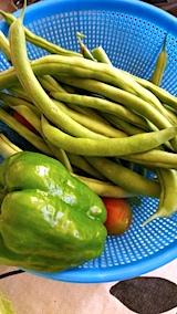 20170718収穫した野菜