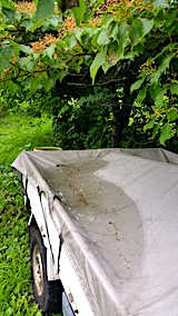20170725軽トラのシートに溜まった雨水