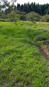 20170726草刈り前のラベンダー畑の様子5