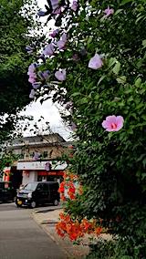 20170728ノウゼンカズラとムクゲの花