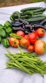 20170811野菜畑野菜の収穫