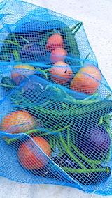 20170812今日収穫した野菜