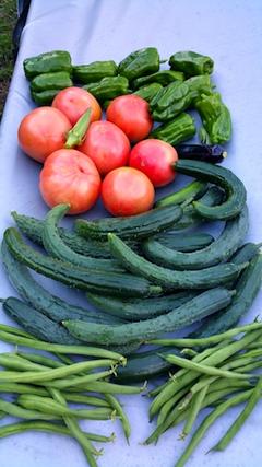 20170815今日収穫した野菜