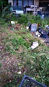 20170815山の入り口の様子草刈り後3