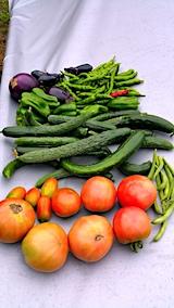 20170816今日の野菜の収穫