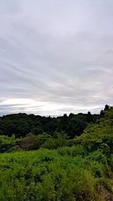 20170816山の様子ミョウガの収穫を終えて