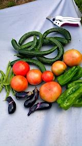 20170817今日収穫した野菜