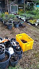 20170817山の入り口の様子鉢植えの草取りと整理1