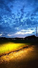 20170817山からの帰り道の様子田んぼと空