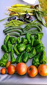 20170818今日収穫した野菜