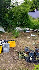 20170818山の入り口の様子鉢植えの草取りと整理5