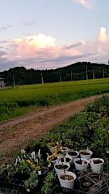 20170819山の入り口の様子鉢植えの草取りと整理4