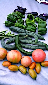 20170822今日収穫した野菜