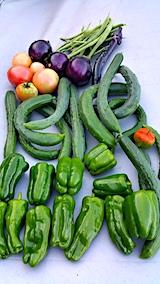 20170826今日収穫した野菜