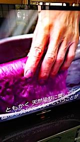 20170828紫草の染色1