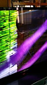 20170828紫草の染色3
