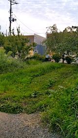 20170828畑の草刈り1