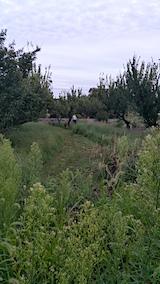 20170828畑の草刈り3