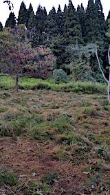 20170908栗畑の下草刈り後の様子2